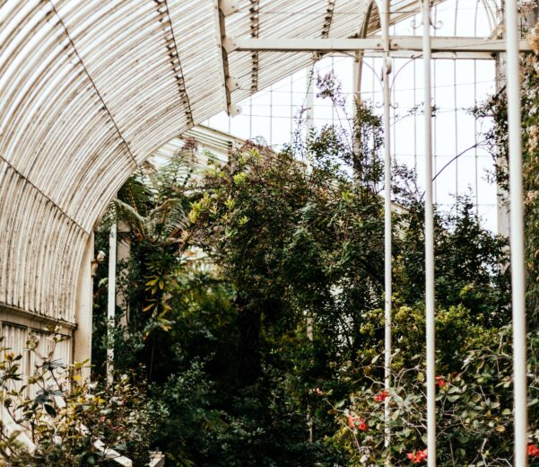 CO₂ for greenhouses