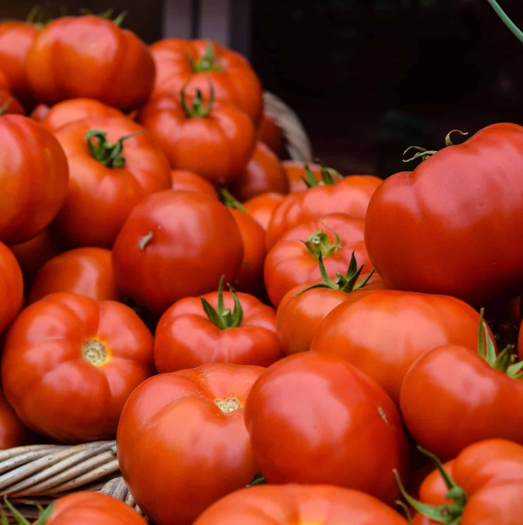 co2 for tomatoes